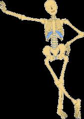 Le système articulaire